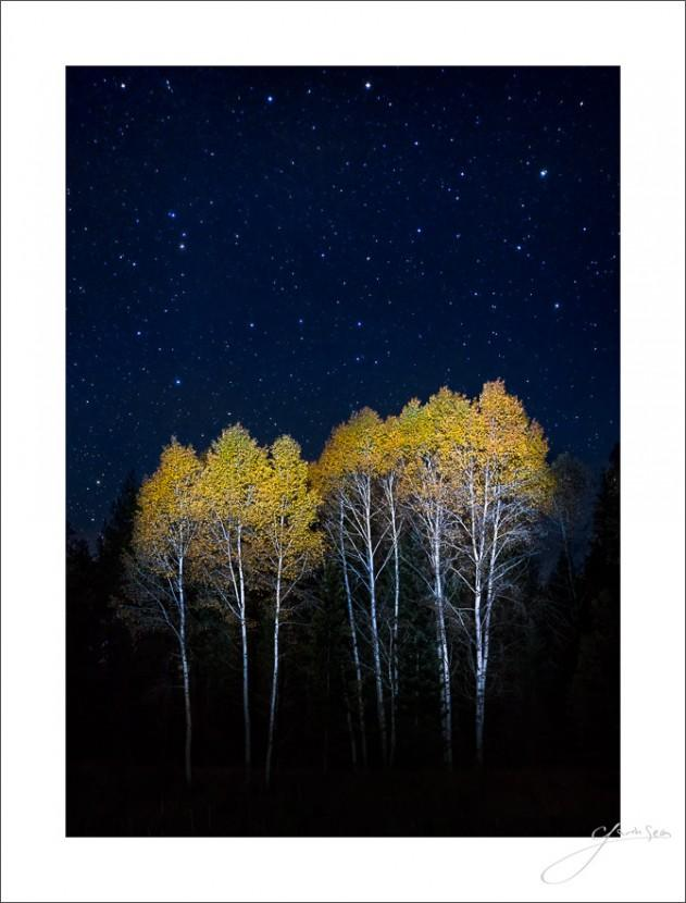Night Fall in the Aspens - general